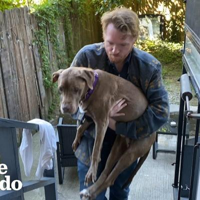 17-Year-Old Dog Wakes Her Foster Dad Up For Walks Every Morning | The Dodo Foster Diaries