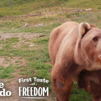 Bear Who Spent His Life In A Cage Is Thrilled To Play In Snow  | The Dodo First Taste Of Freedom