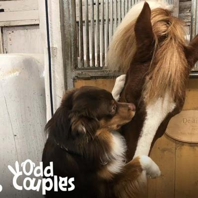 VIDEO: This dog can't stop hugging his horse BFF