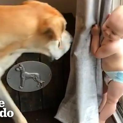 Watch This Little Boy Grow Up With A 180-Pound Best Friend | The Dodo Soulmates | The Dodo Soulmates
