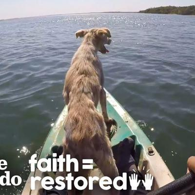 Dog Abandoned On A Desert Island Rescued | The Dodo Faith=Restored