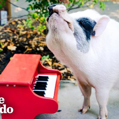 Rescue Pig Runs Wild At The Park | The Dodo Airbnb Experiences