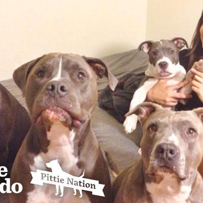 This Dog Made Her Mom Fill Her House Up With Pit Bulls  | The Dodo Pittie Nation