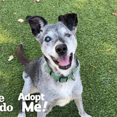 Watch This 19-Year-Old Puppy Pick His Very Own Toy At The Pet Store | The Dodo Adopt Me!