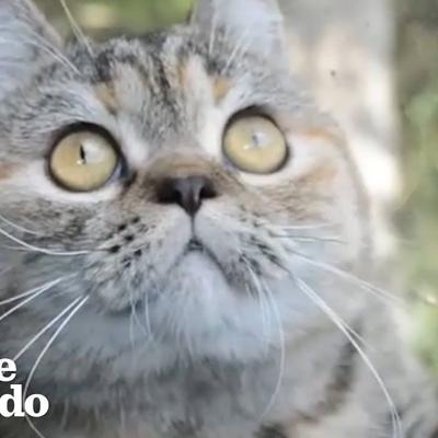 VIDEO: This cat rides shotgun with her truck driver dad every single day