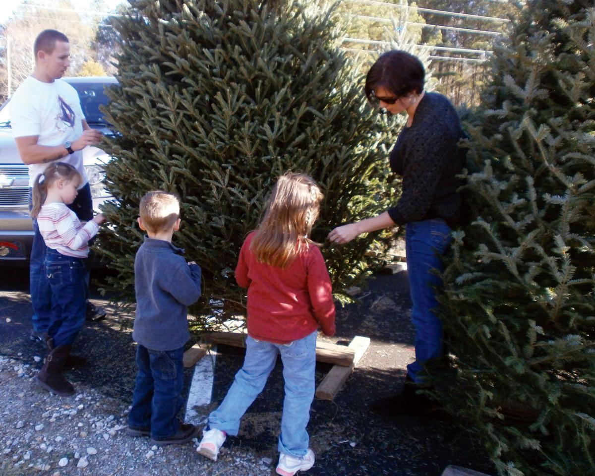 Christmas trees flourish in Henry