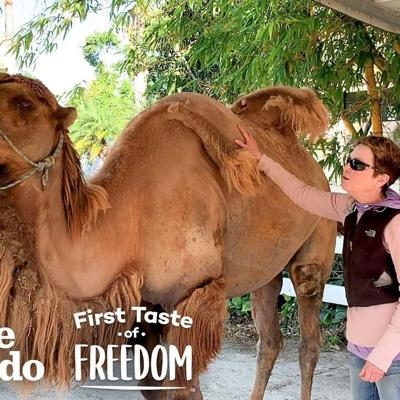 Camel So Skinny His Humps Collapsed Gets Strong Enough To Run Free | The Dodo First Taste Of Freedom