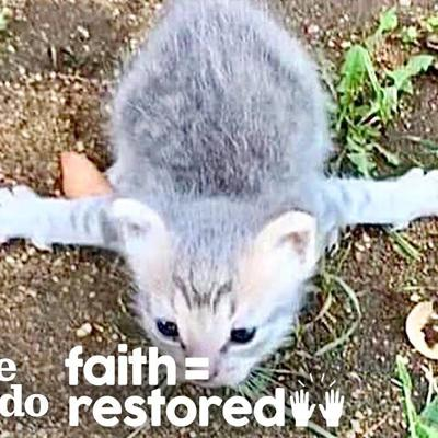 Tiny Kitten Who Couldn't Walk Runs After Her Siblings Now  | The Dodo Faith = Restored