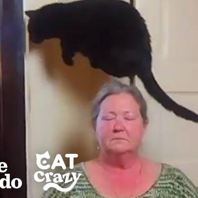 Cat Jumps Over Kitchen Floor Because She Thinks It's Evil | The Dodo Cat Crazy