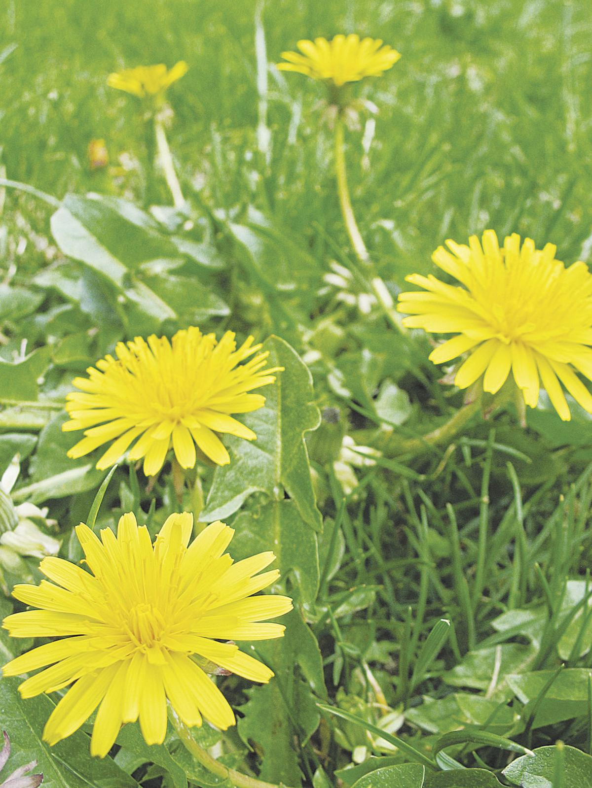 Edible Flower Garden Takes Research Planning Hd Homes Herald