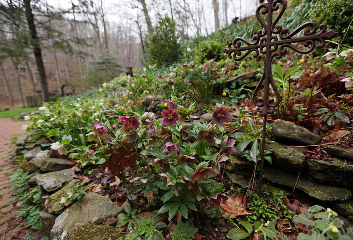 Wooded setting is charming landscape for shade garden | Hdhomes ...
