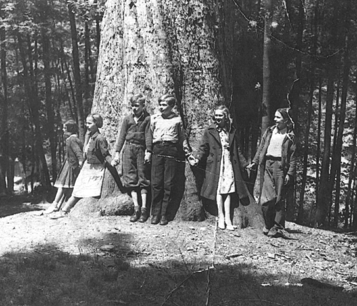 mingo county oak.jpg