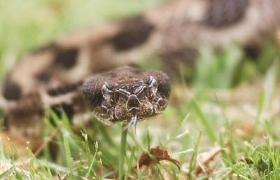 Snake_92182.jpg