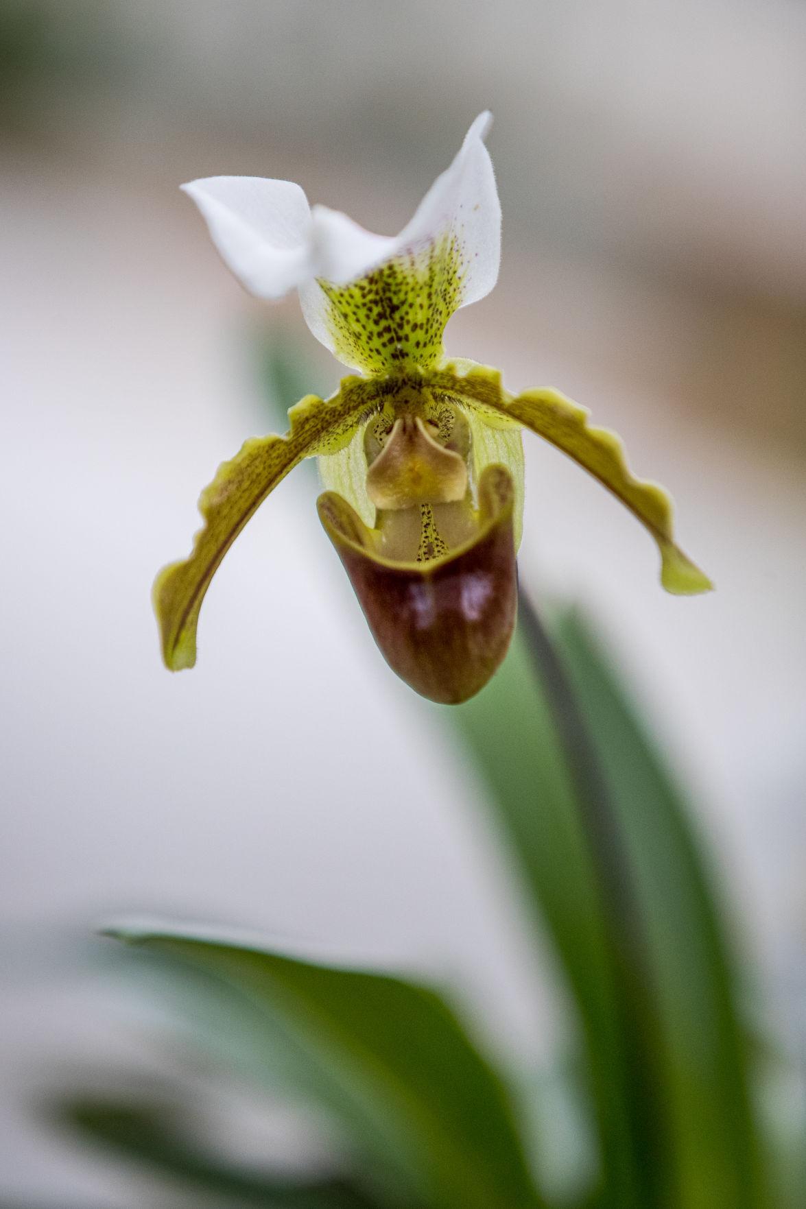 20210107 orchid 02.jpg