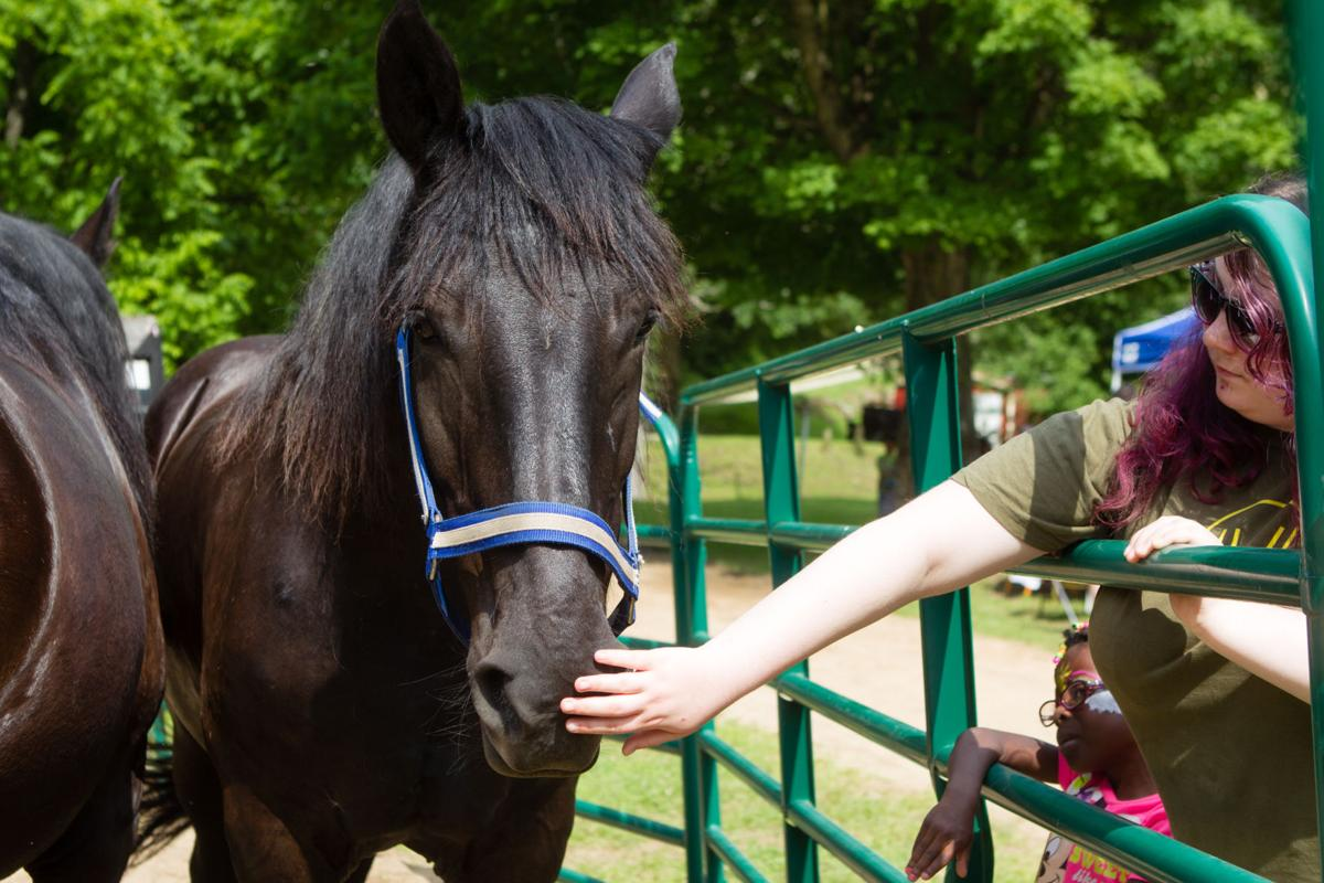 0616_equinetherapy