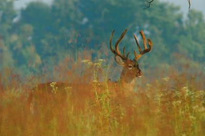 Deer Season has begun in Kentucky