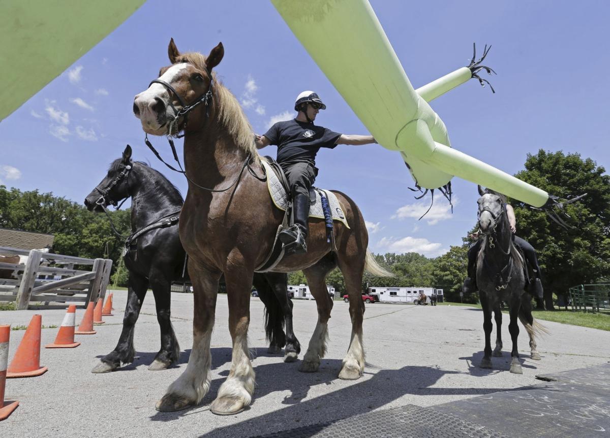 Exchange-Police Horses-Training