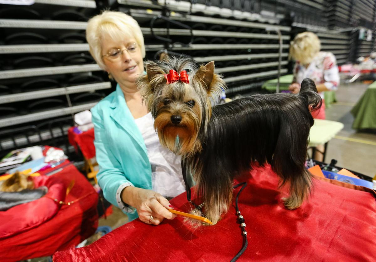 Annual dog shows bring hundreds to Huntington | News | herald ...