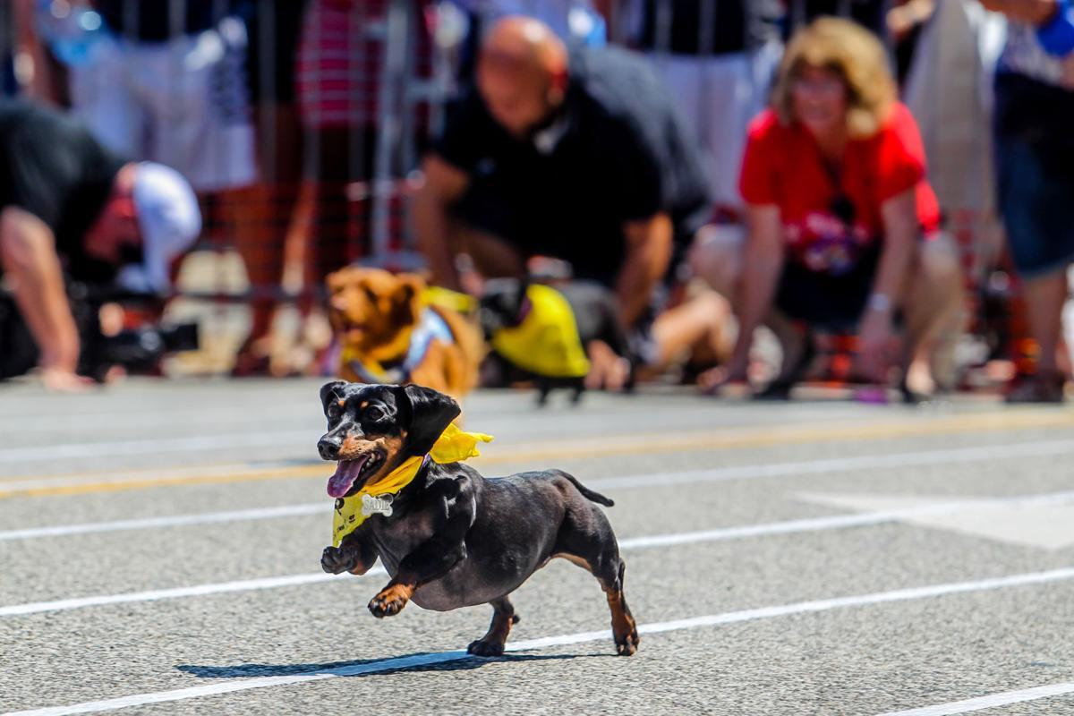 0728_hotdogfestival