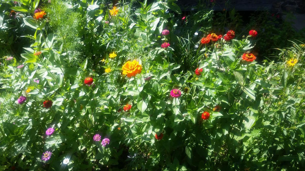 Send Us Your Garden Photos Features Entertainment Herald