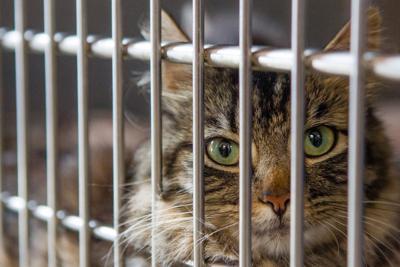 0627_cats-5.JPG_02466.jpg