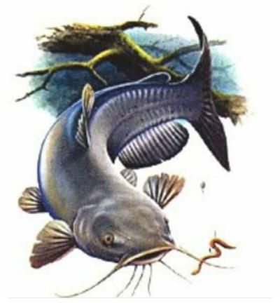 Fishing Tournament Logo