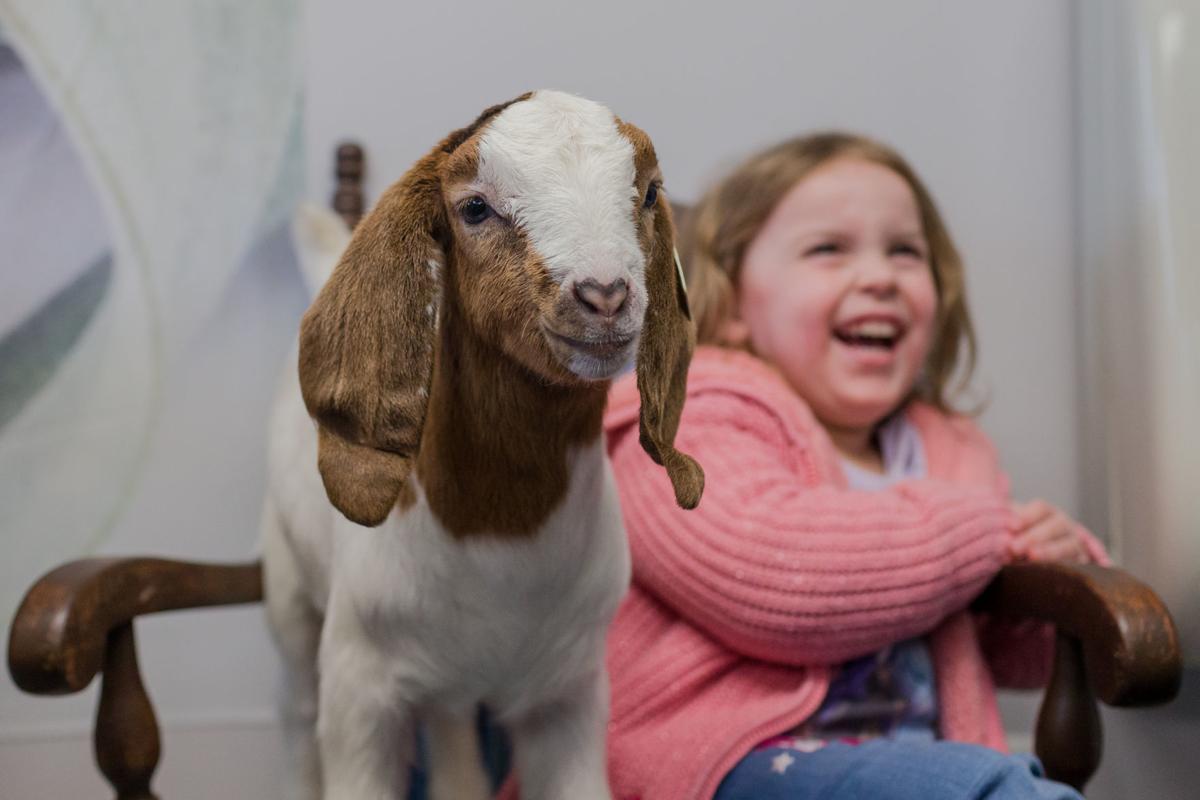 20200210-hd-goatsnuggle