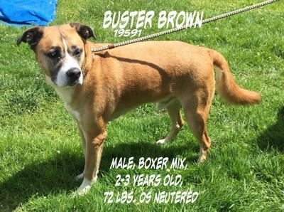 BusterBrown2a_69970.jpg