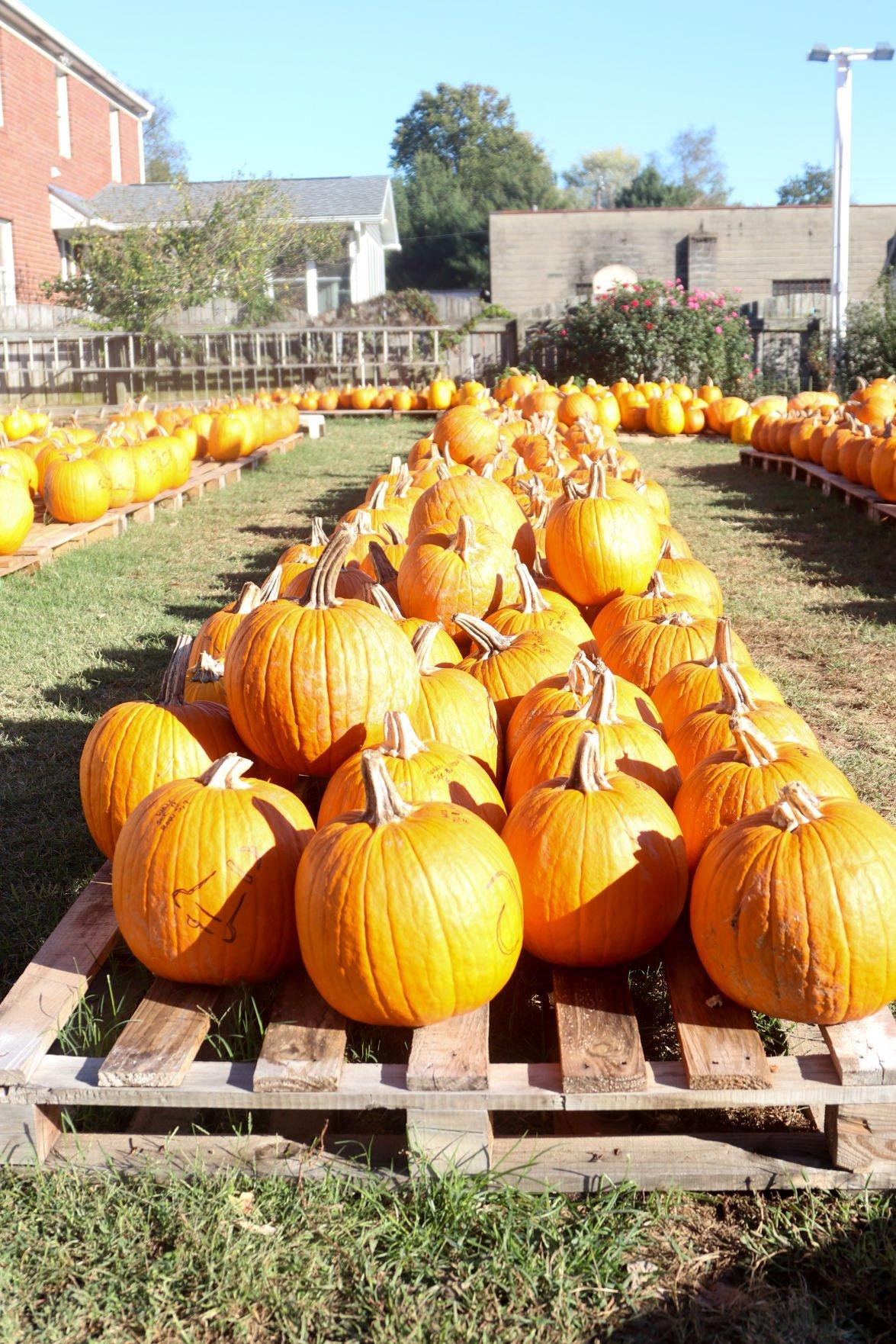 s Pumpkin House Volunteers Galleries
