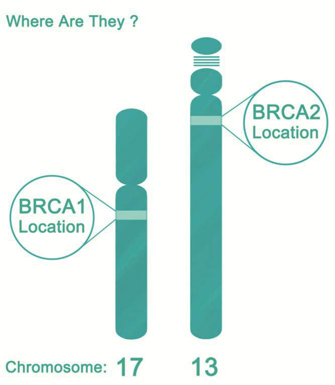 Brca gene and breast cancer