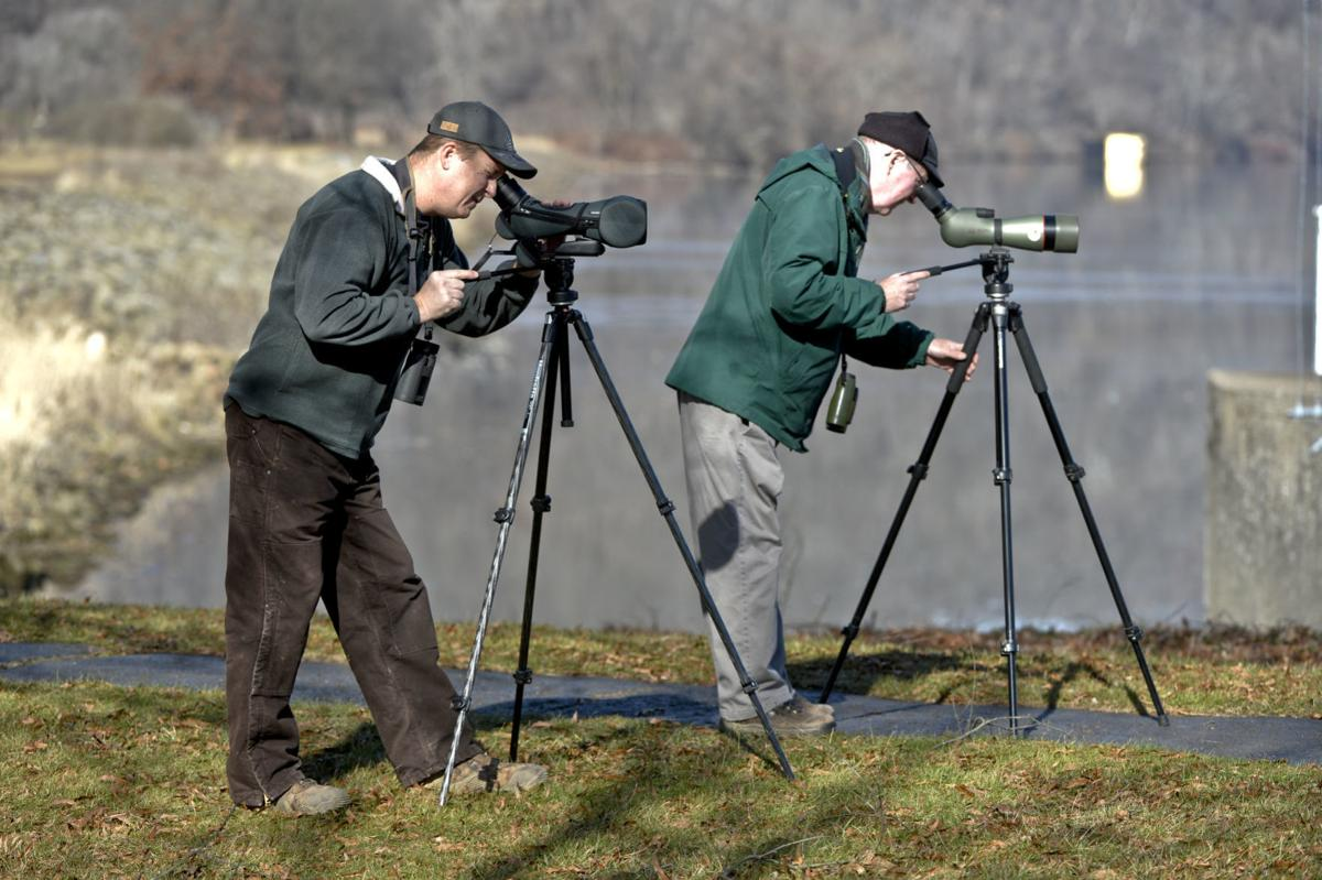 Ohio River Eagle Watch