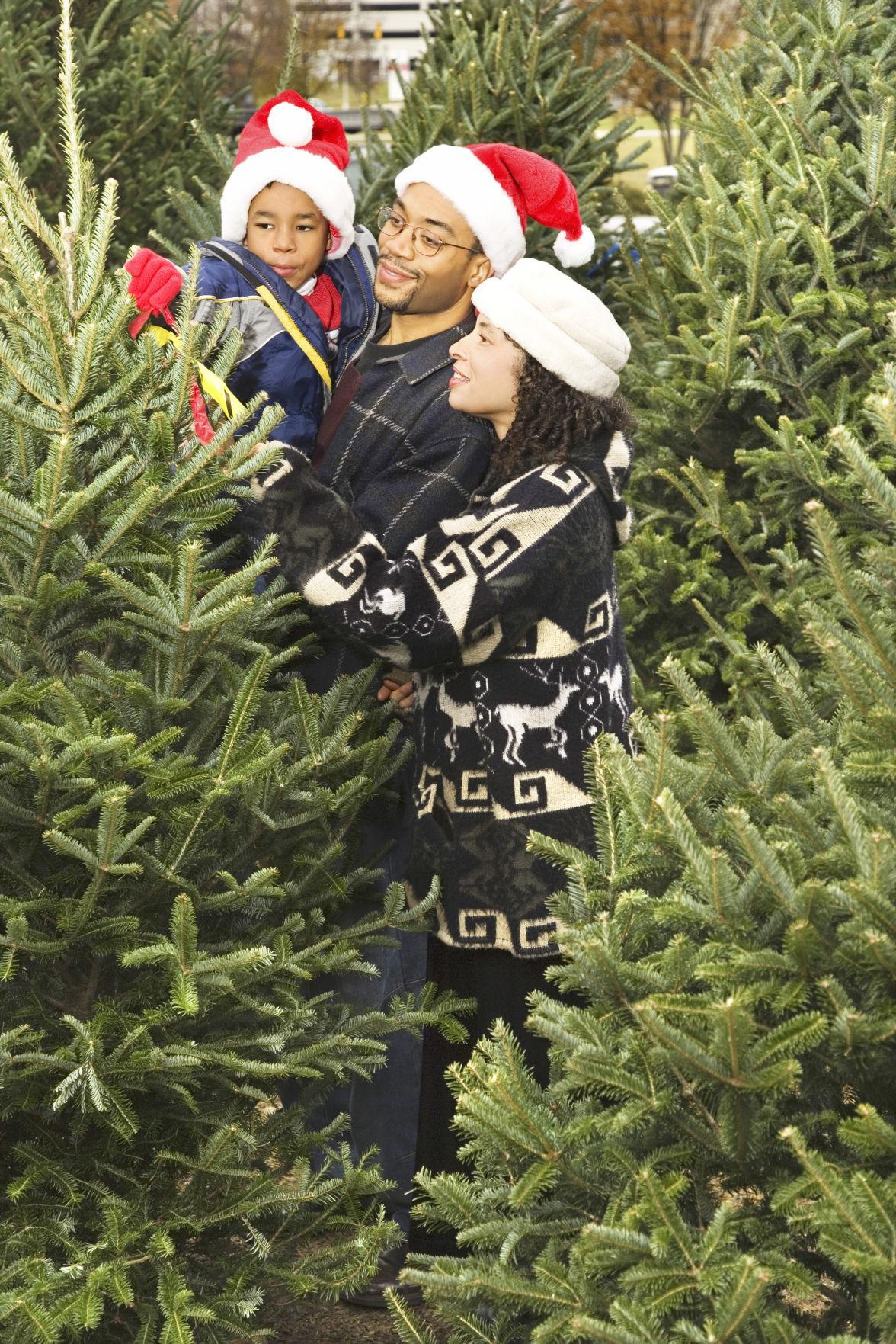 Keep Christmas tree fresh through the holiday season | News ...