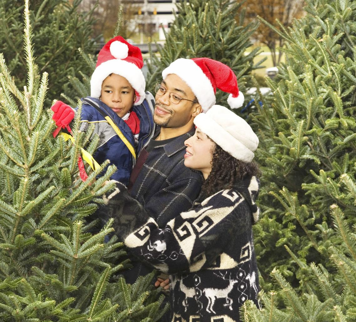 Keep Christmas tree fresh through the holiday season | News | herald ...