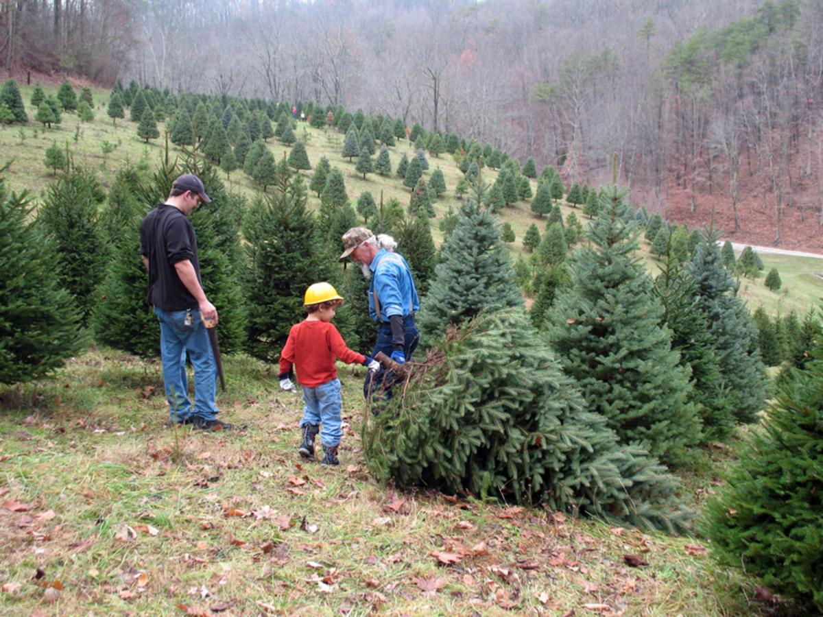 Jarvis Christmas Tree Farm Gives Families A Chance To Make  - Christmas Tree Farm In Virginia