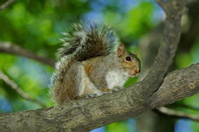 Photo: Squirrel Hunting - A lifelong passion