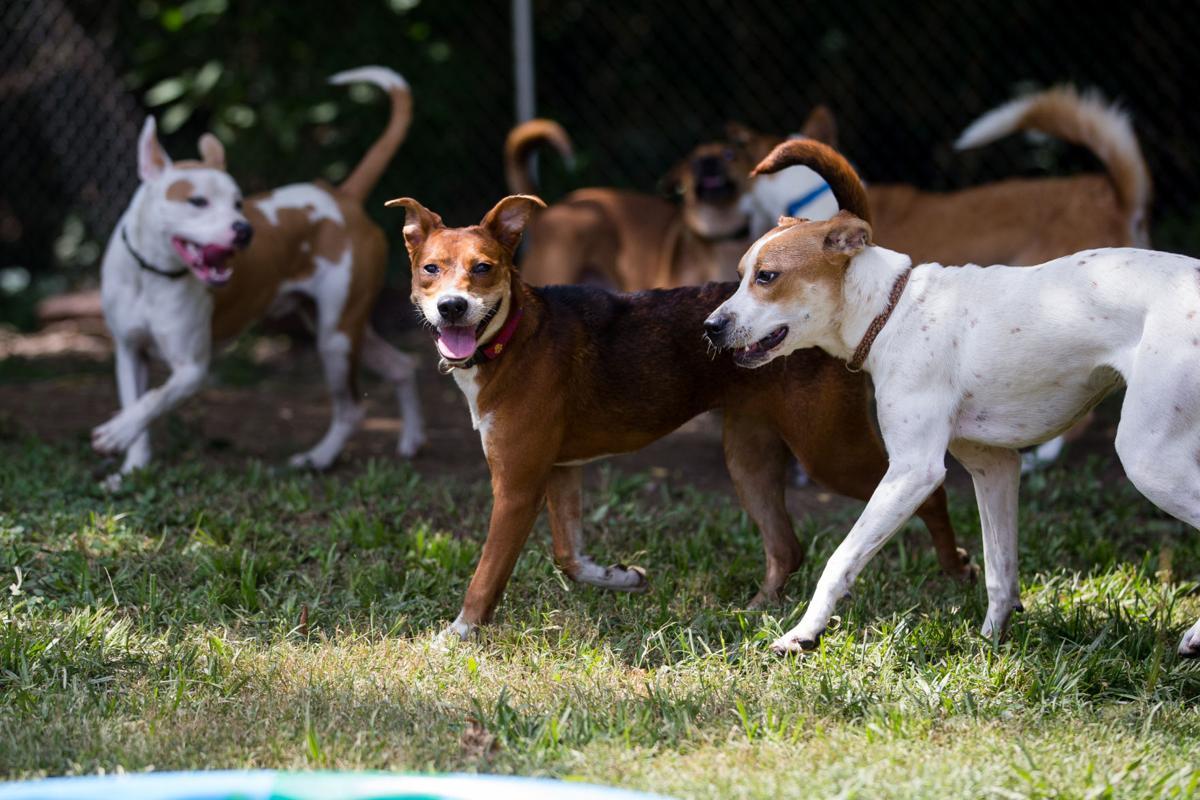 2019 0809 dogtraining