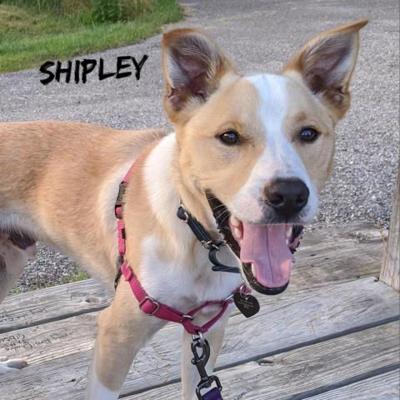 Shipley1.jpg
