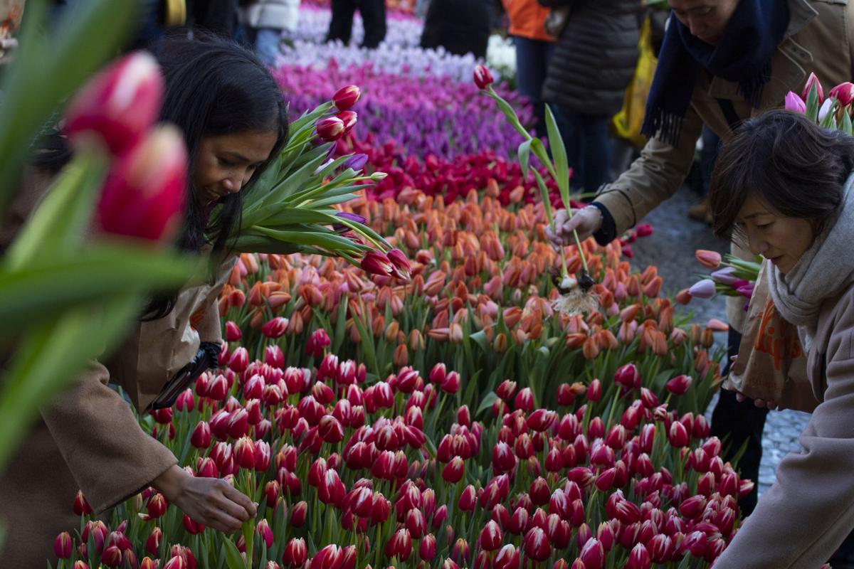 Netherlands Tulip Day