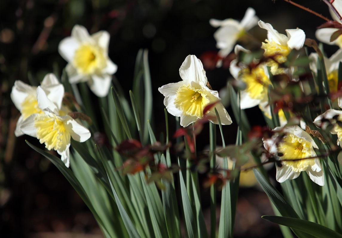 Photos Spring Flowers Bloom In Huntington Multimedia Herald