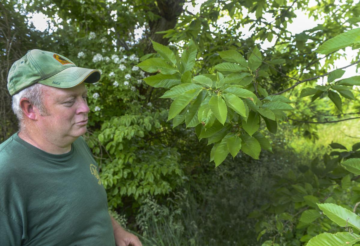 Clements Tree Farm
