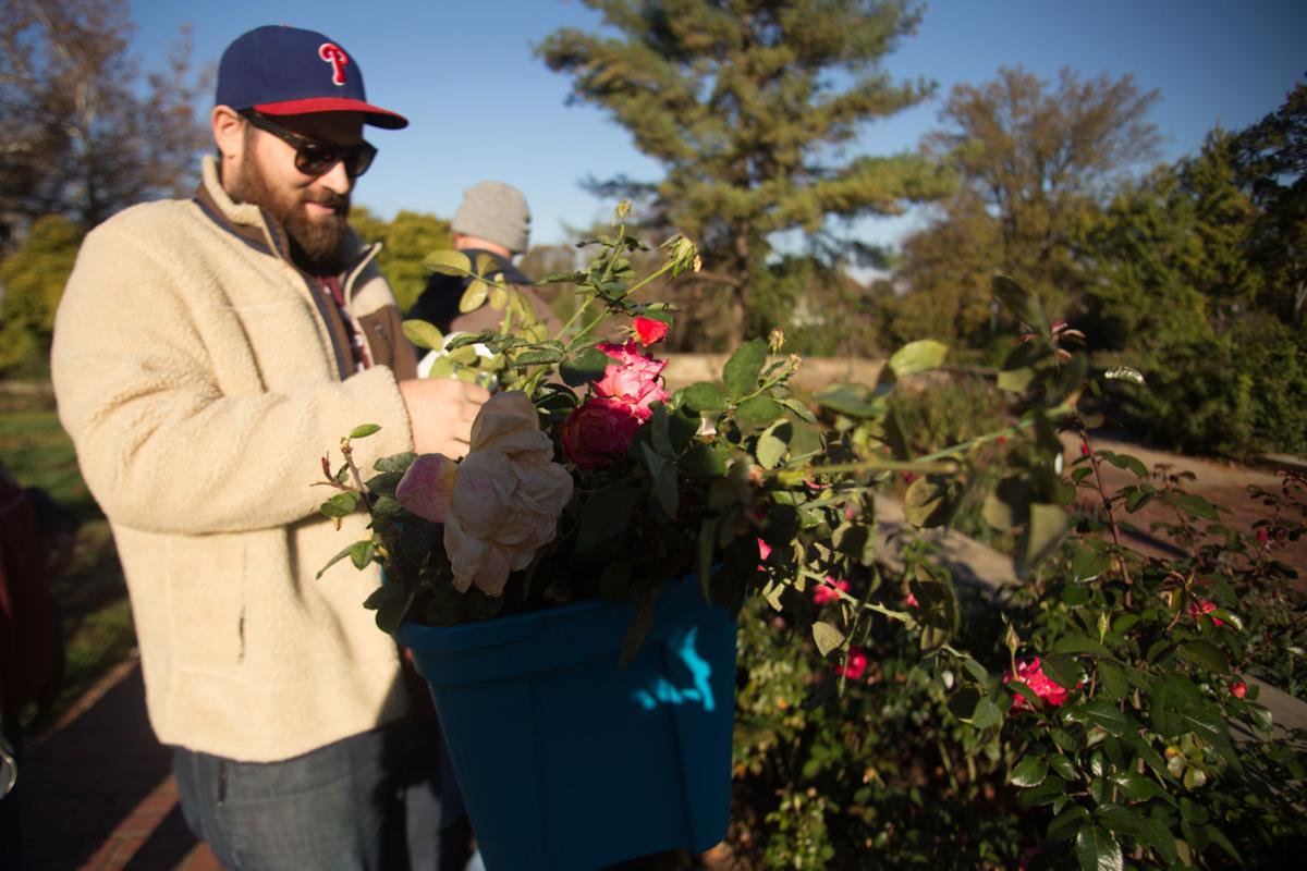 Photos: GHPRD annual rose clipping giveaway | Multimedia | herald ...