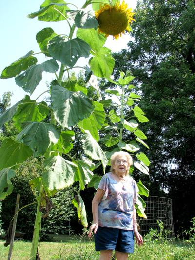 The 'Sunflower Queen' does it again