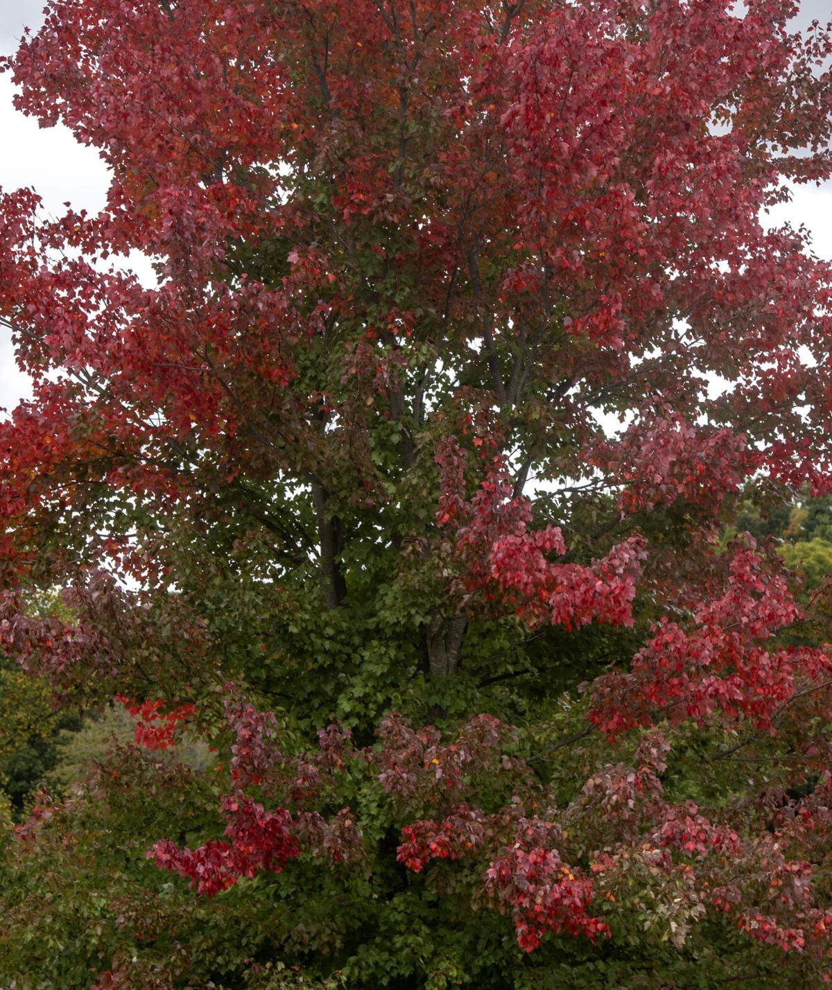 Fall Color Peak 03