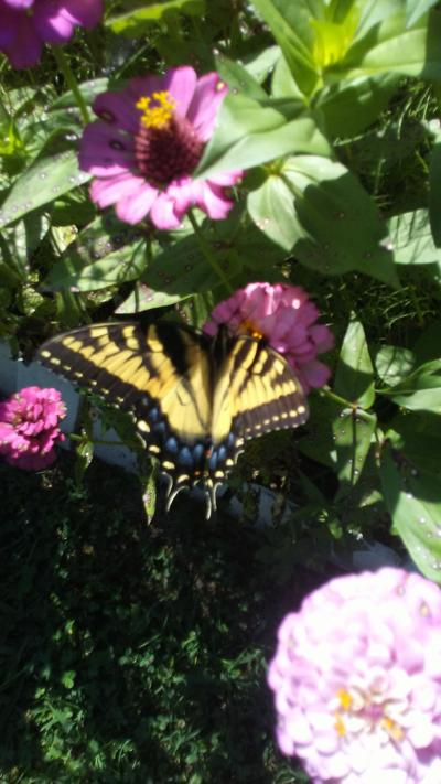 SUBMITTED SNAPSHOT: BUTTERFLY