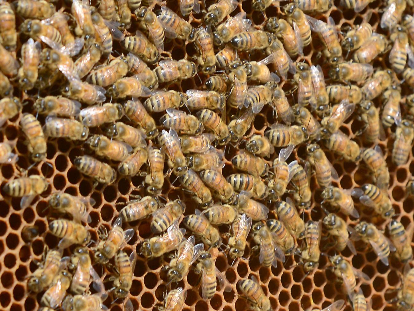 Retired Electrician Owns One Of Largest Bee Farms In Southwest Va Latest Headlines Heraldcourier Com