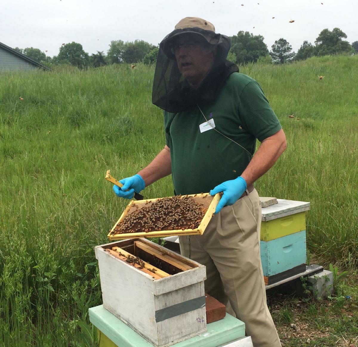 Bee Keeping 01