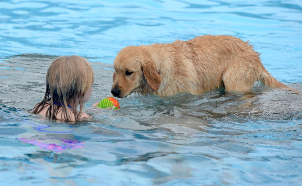 Dogs Owners Splash And Enjoy Dog Days Of Summer At Annual Pool Event Bristol Local News