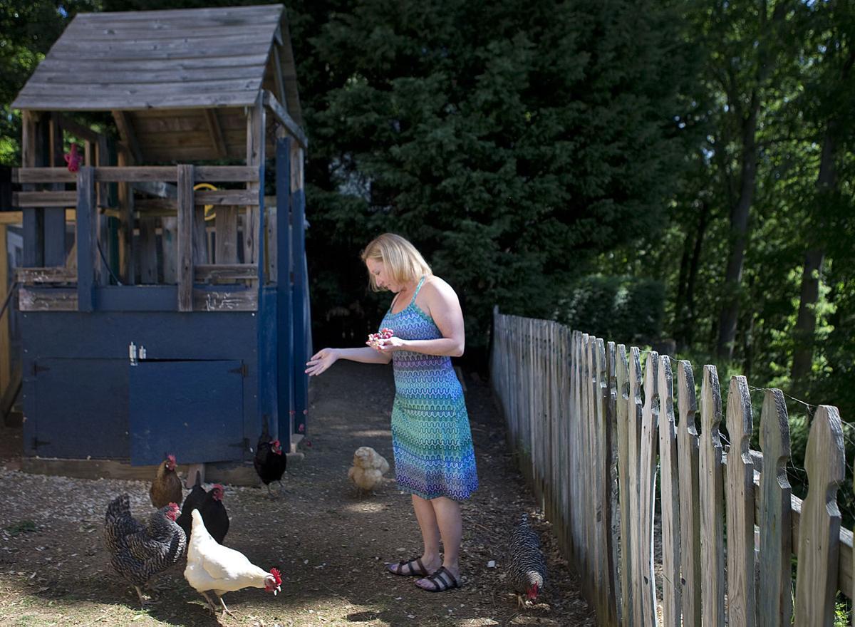 Folks flock to chicken-keeping | Local News | heraldcourier com