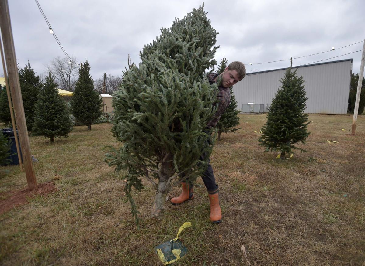 Tree Safety 02