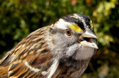 bird column sparrow-944942_1920